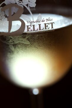 France, Alpes Maritimes (06), Nice, AOC Bellet, Domaine de Vin Toasc, verre de vin blanc